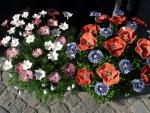 Blumen_02